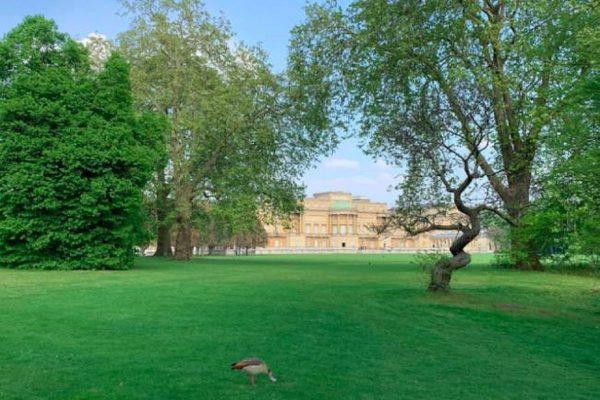 gradini palatul buckingham