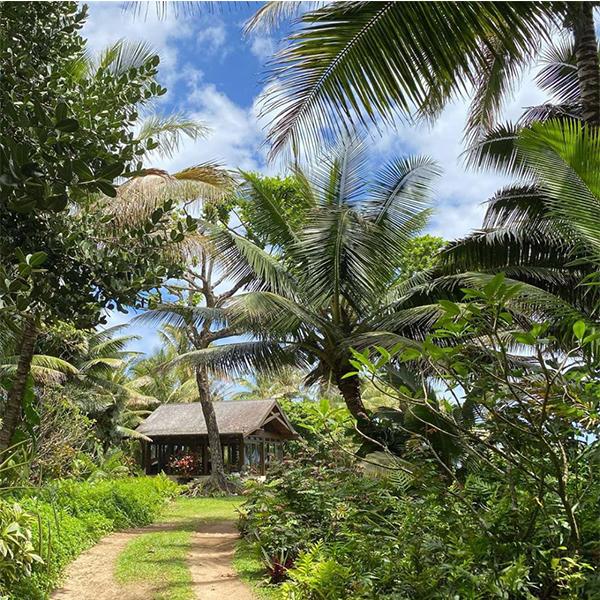 pierce brosnan hawaii